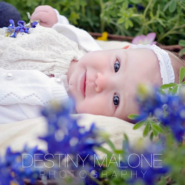 Bluebonnet Photos Near Dallas TX