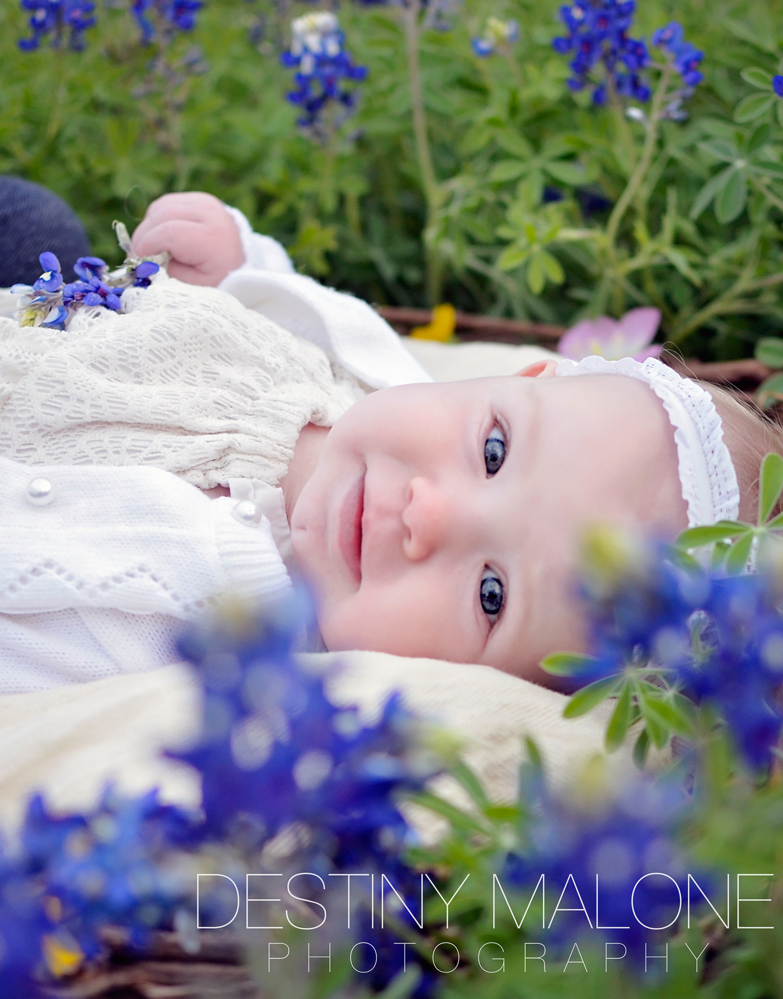 bluebonnets baby infant photography dallas tx